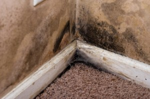 Mould can be prevented using a dehumidifier and is a health hazard